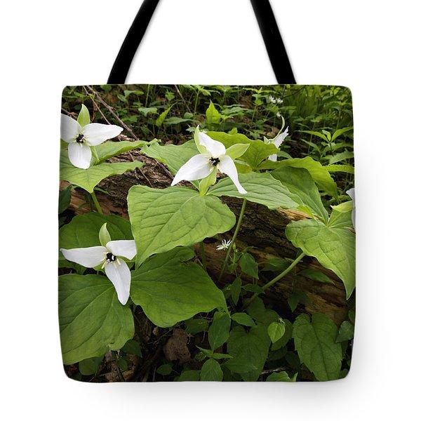 Sweet White Trillium - D003800 Tote Bag by Daniel Dempster