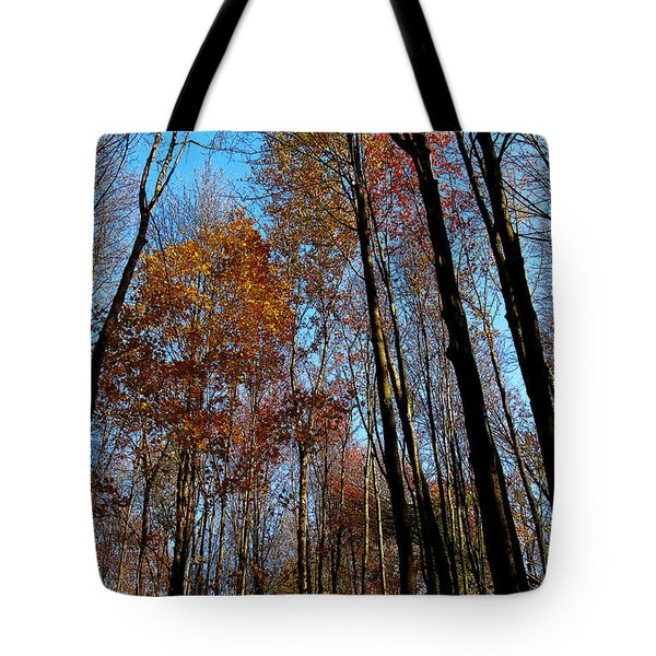 Tall Trees Autumn 2011 Tote Bag by Tina M Wenger
