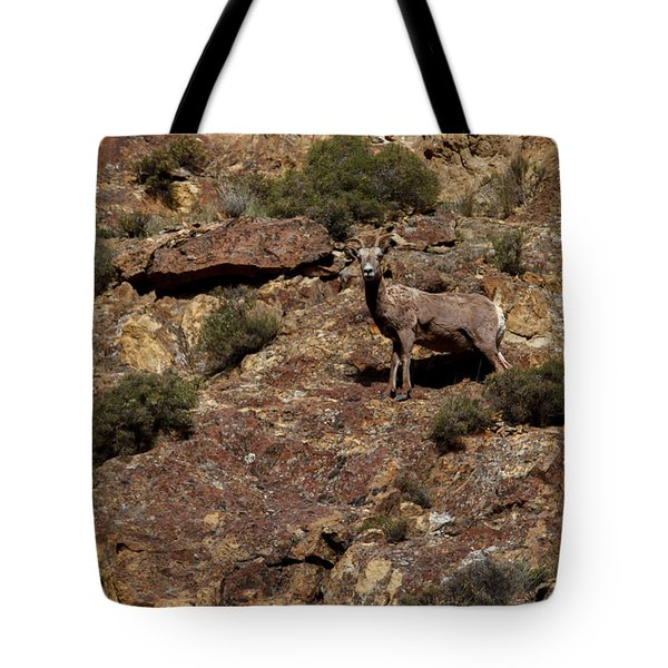 The Bighorn Uwe Tote Bag by Robert Bales