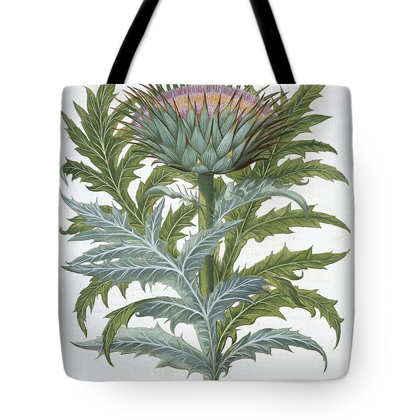 The Cardoon, From The Hortus Tote Bag by German School