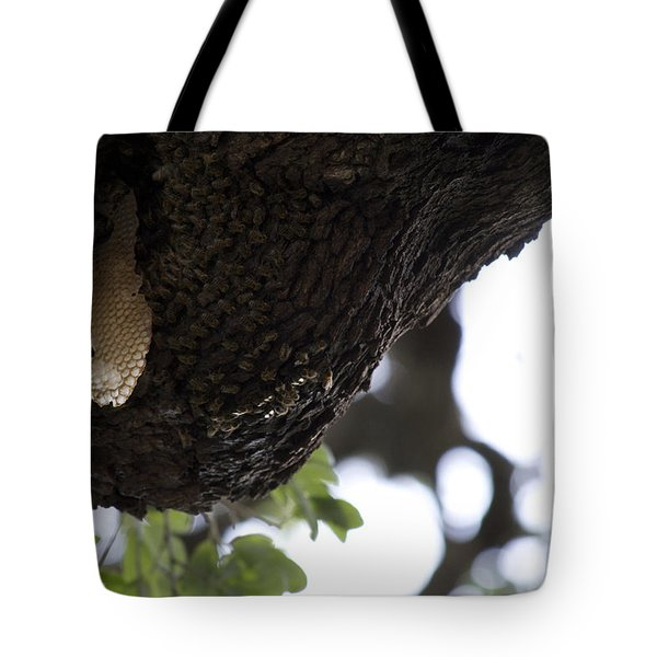 The Live Oak Tote Bag by Shawn Marlow