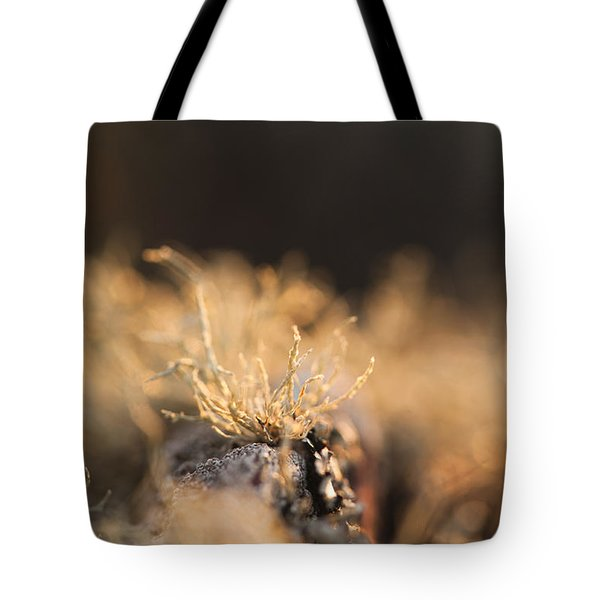 The Miniature World Of Lichen Tote Bag by Anne Gilbert