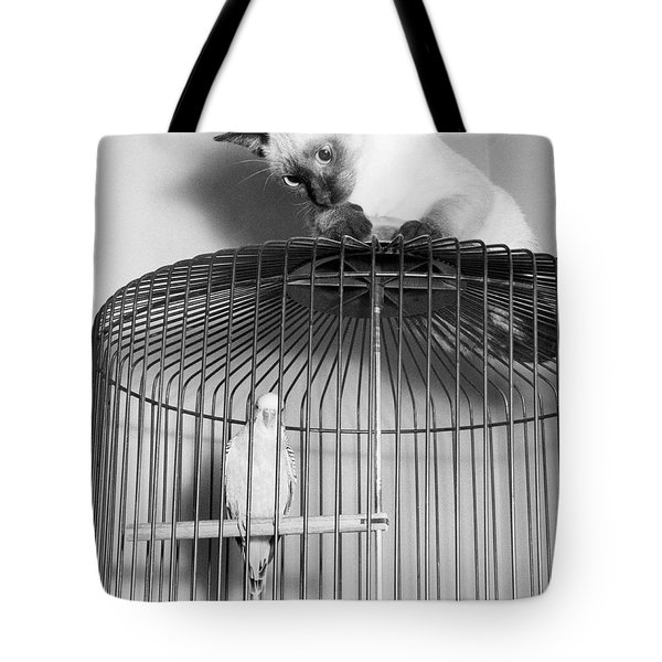 The Parakeet And The Cat Tote Bag by Underwood Archives