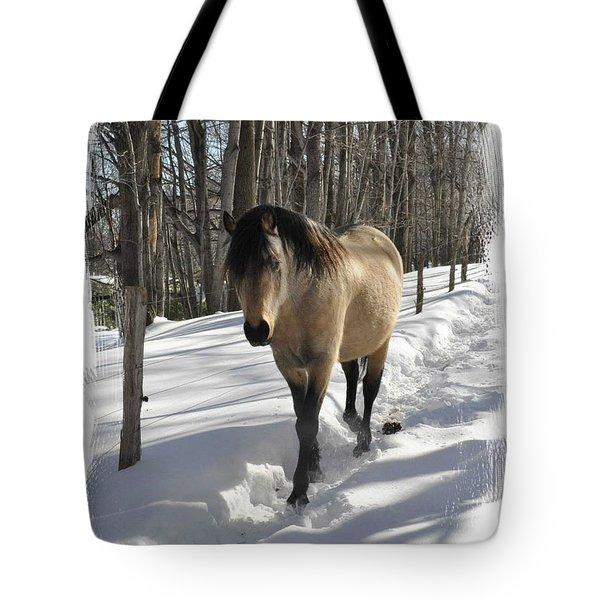 The Paso Fino Stallion Named Brio Tote Bag by Patricia Keller