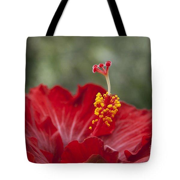 The Star Of Dawn Tote Bag by Sharon Mau