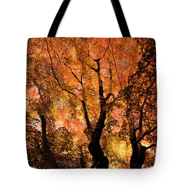 The Trees Dance As The Sun Smiles Tote Bag by Don Schwartz