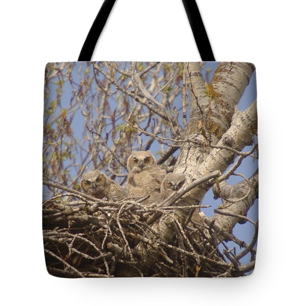 Three Baby Owls  Tote Bag by Jeff Swan