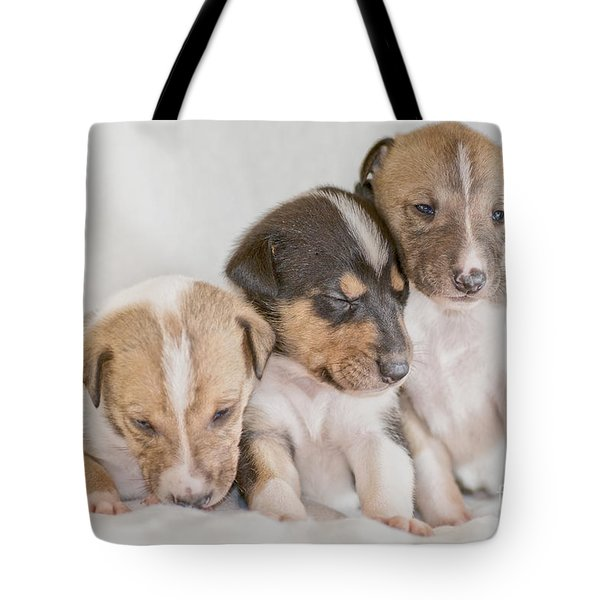 Three Collie Puppies Tote Bag by Martin Capek
