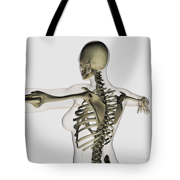 Three Dimensional View Of Female Upper Tote Bag by Stocktrek Images