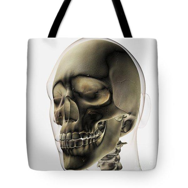 Three Dimensional View Of Human Skull Tote Bag by Stocktrek Images