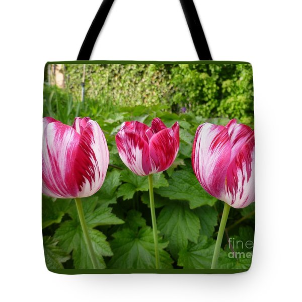 Three Pink Rembrandt Tulips Tote Bag by Lingfai Leung