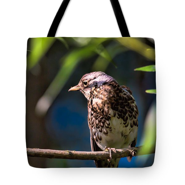 Thrush Tote Bag by Leif Sohlman