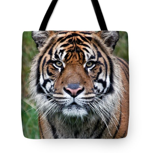 Tiger Tote Bag by Athena Mckinzie