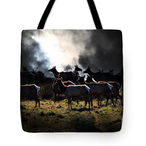 Tomales Bay Harem Under The Midnight Moon - 7D21241 Tote Bag by Wingsdomain Art and Photography