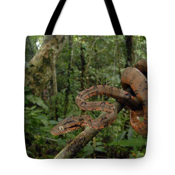 Tree Boa Tote Bag by Francesco Tomasinelli