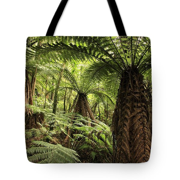 Tree Ferns Tote Bag by Les Cunliffe