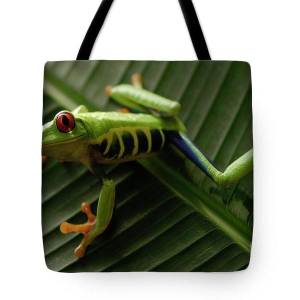 Tree Frog 16 Tote Bag by Bob Christopher