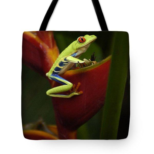 Tree Frog 3 Tote Bag by Bob Christopher