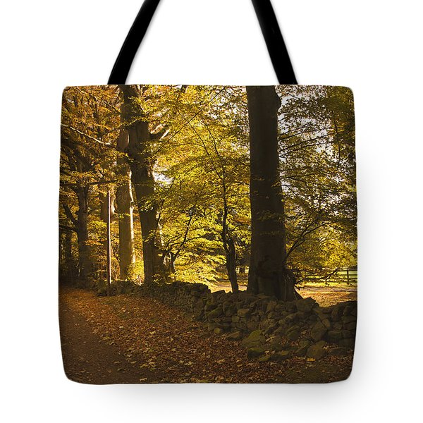 Tree Lined Road Covered With Fallen Tote Bag by John Short