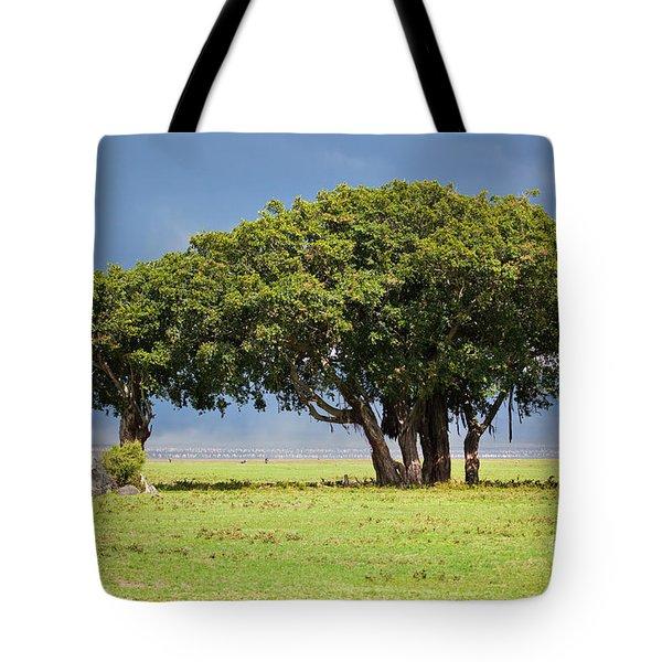 Tree On Savannah. Ngorongoro In Tanzania Tote Bag by Michal Bednarek