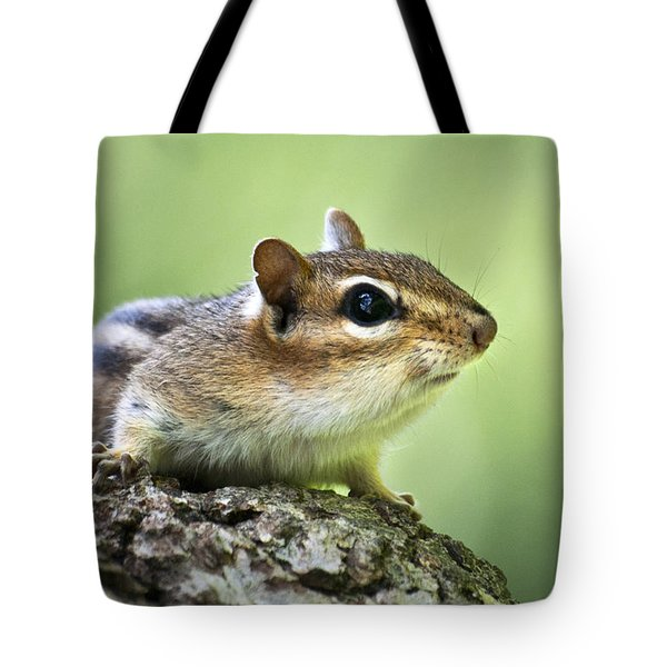 Tree Surfing Chipmunk Tote Bag by Christina Rollo
