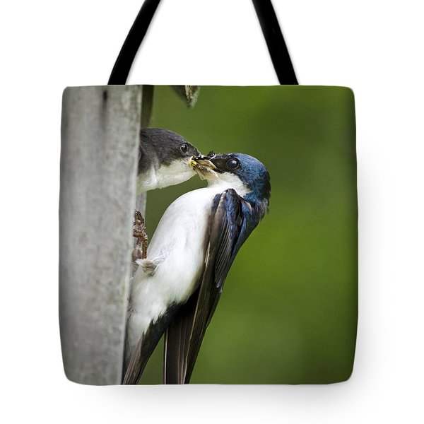 Tree Swallow Feeding Chick Tote Bag by Christina Rollo