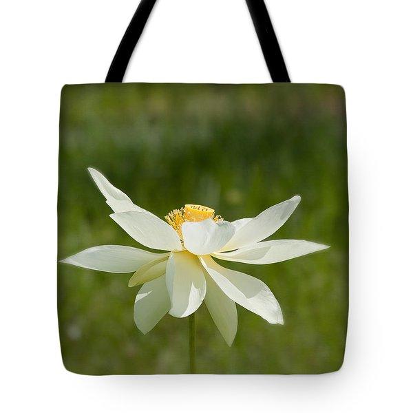 Tropical Lotus Flower Tote Bag by Kim Hojnacki