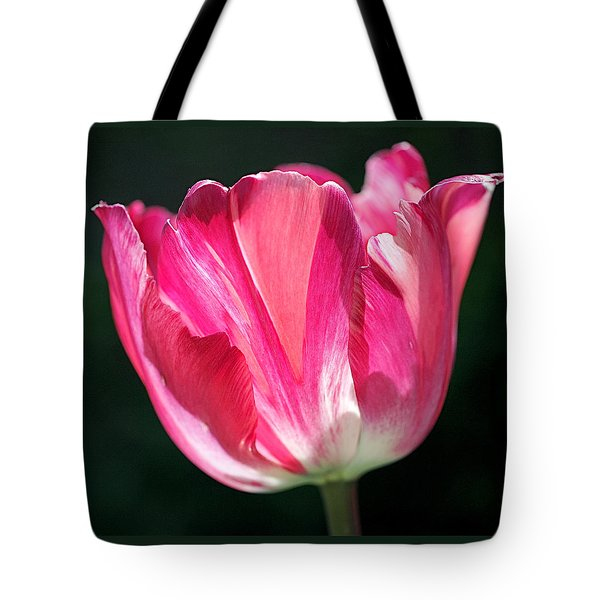 Tulip Painted in Shades of Pink Tote Bag by Rona Black