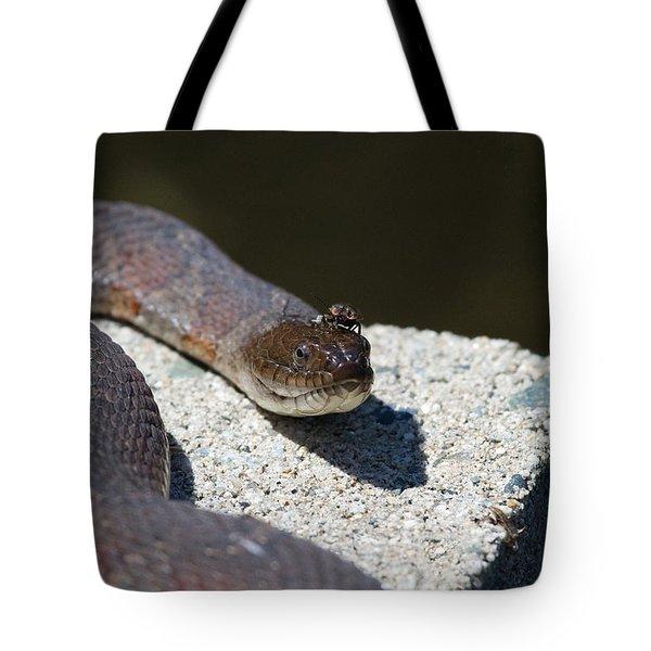 Two Creeps Tote Bag by Karol Livote