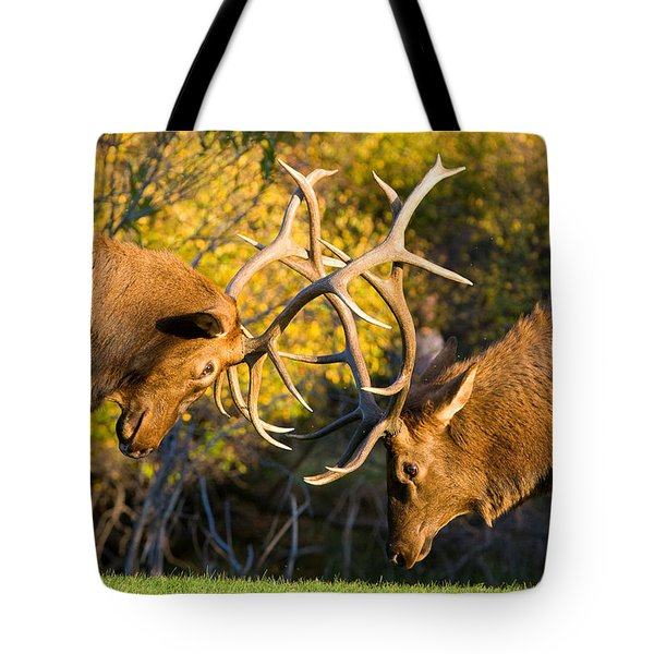 Two Elk Bulls Sparring Tote Bag by James BO  Insogna