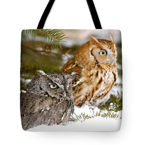 Two Screech Owls Tote Bag by John Pitcher