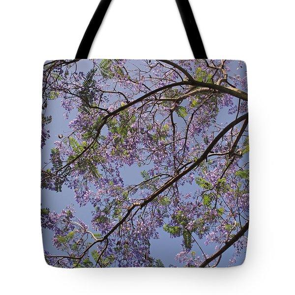 Under The Jacaranda Tree Tote Bag by Rona Black