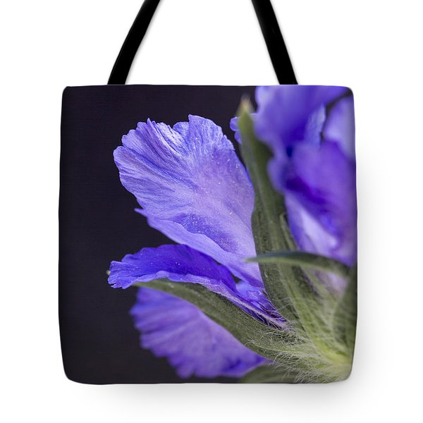 Underneath Tote Bag by Caitlyn  Grasso