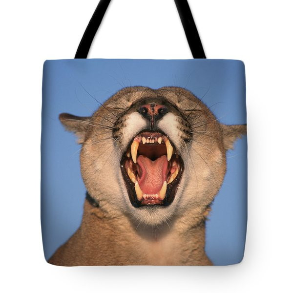 V.hurst Tk21663d, Mountain Lion Growling Tote Bag by Victoria Hurst