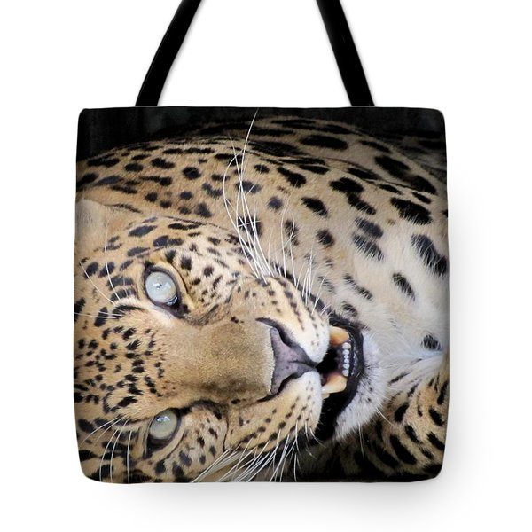 Voodoo The Leopard Tote Bag by Keith Stokes
