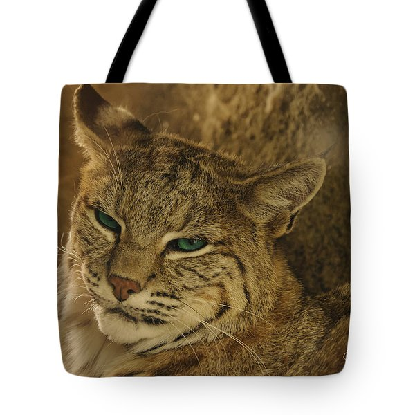 Wary Bobcat Tote Bag by Penny Lisowski