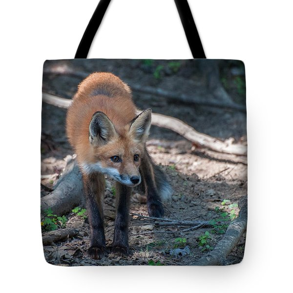 Wary Fox Tote Bag by Bianca Nadeau