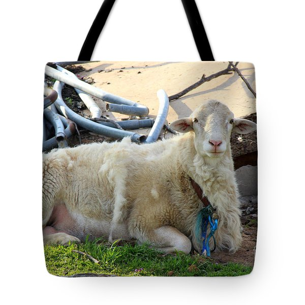 Was I Baaaad? Tote Bag by Kathy  White