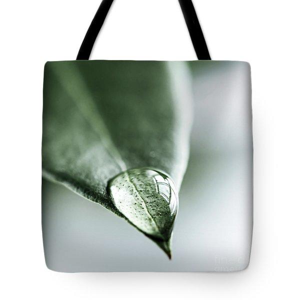 Water drop on leaf Tote Bag by Elena Elisseeva