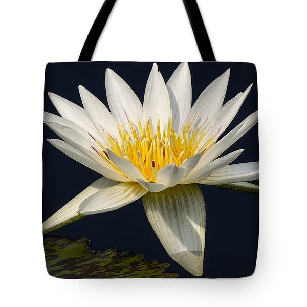 Waterlily and Pad Tote Bag by Susan Candelario
