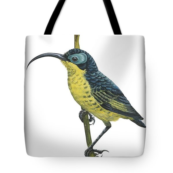 Wattled False Sunbird Tote Bag by Anonymous