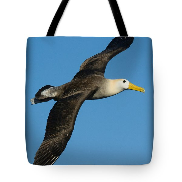 Waved Albatross Diomedea Irrorata Tote Bag by Panoramic Images