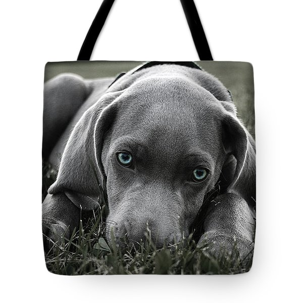 Weimaraner  Tote Bag by Marvin Blaine