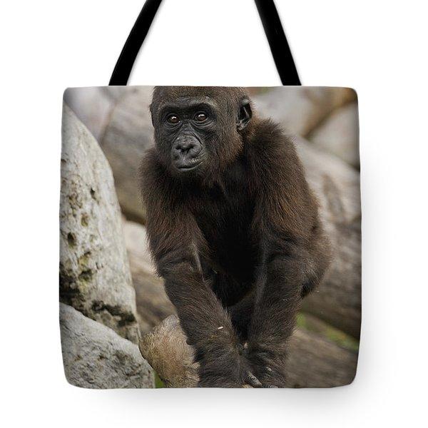 Western Lowland Gorilla Baby Tote Bag by San Diego Zoo