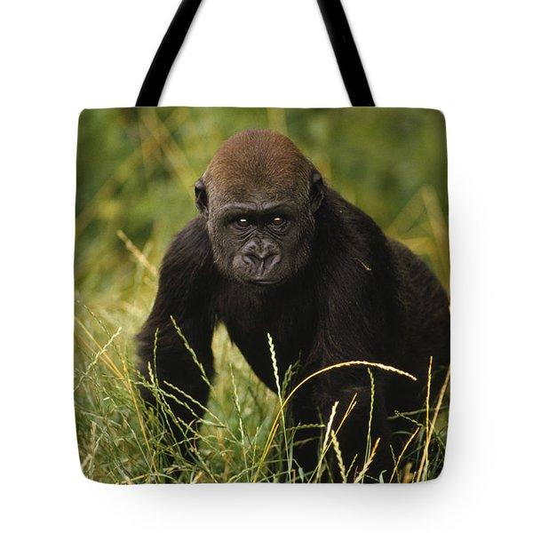 Western Lowland Gorilla Juvenile Tote Bag by Gerry Ellis