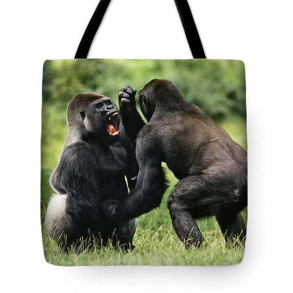 Western Lowland Gorilla Males Fighting Tote Bag by Konrad Wothe