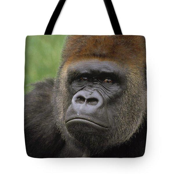 Western Lowland Gorilla Silverback Tote Bag by Gerry Ellis