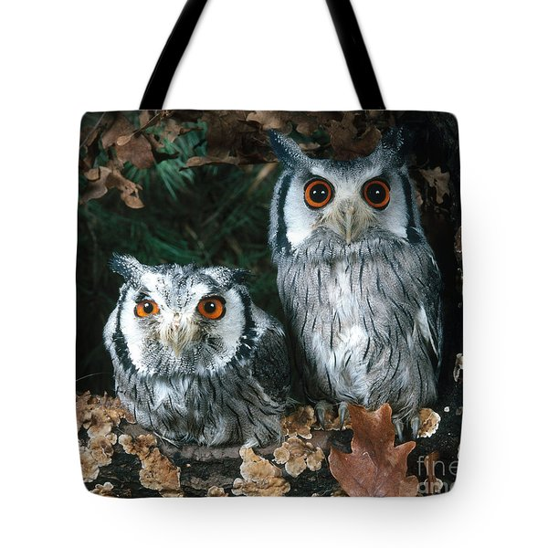 White Faced Scops Owl Tote Bag by Hans Reinhard