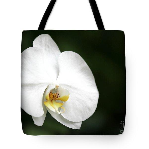 White Light Tote Bag by Sabrina L Ryan