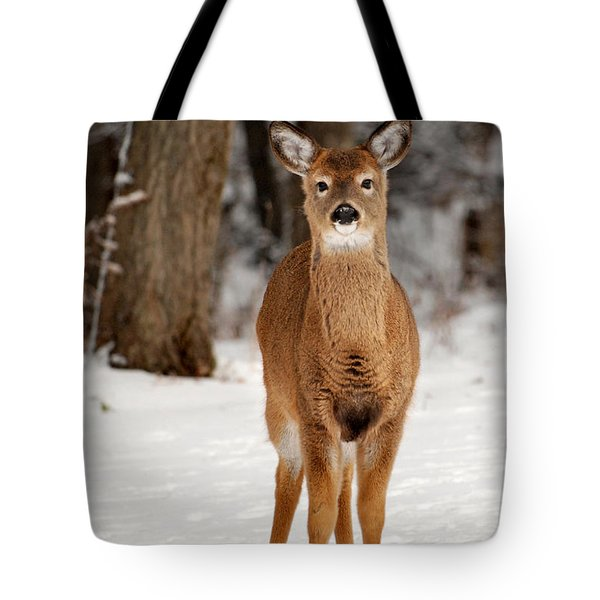 Whitetail In Snow Tote Bag by Christina Rollo